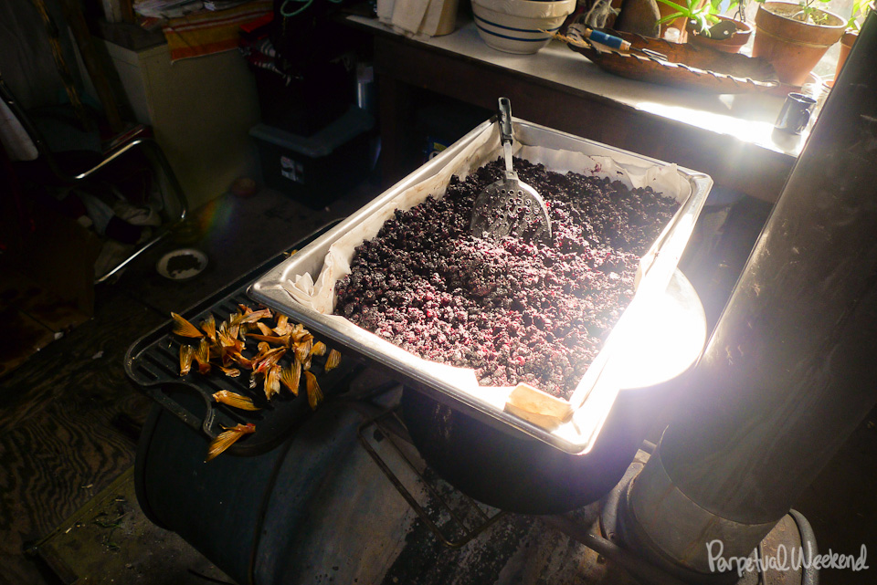 wild berries drying on racks, subsistance living, alaska