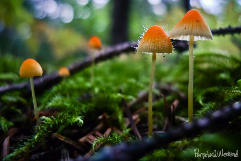 strange, magic, mushroom, fungi, alaska, boreal forest