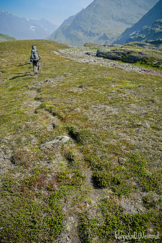 Grizzly bear trail Alaska