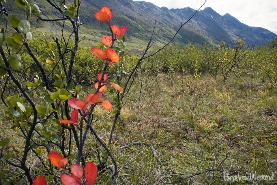 fall leaves in wrangell st elias national park