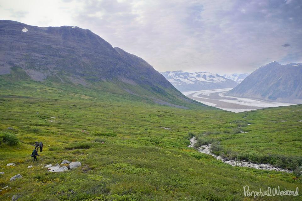 alder bushwacking in alaska