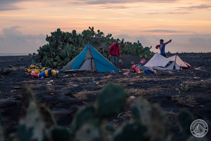 Cacti, tents, and pastic flotsam at sunrise on the Gulf of Mexico near Veracruz