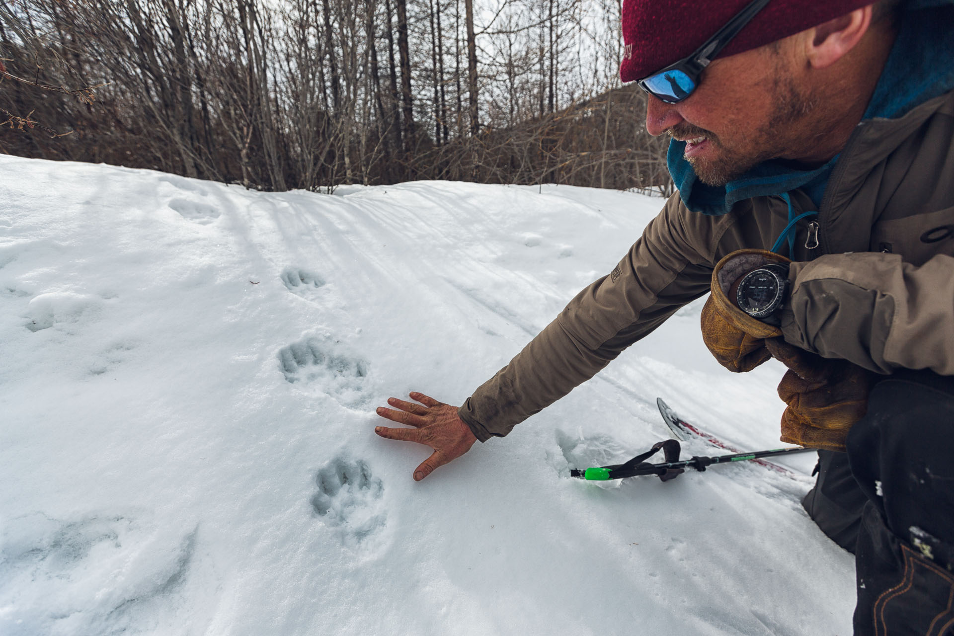 I discovered this set of fresh wolverine tracks. Forrest McCarthy leans down to examine.